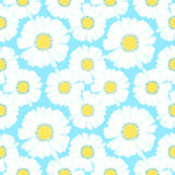 Seamless pattern carpet with chamomiles on green.  Stock Images