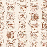 Seamless pattern with cats Siamese, British, Siberian, Persian, Scottish Fold, Maine Coon, Bengal, Sphynx in doodle hipster style. Stock Image