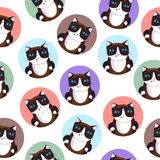 Seamless pattern of the cats. Siamese cat. Vector illustration. Stock Images