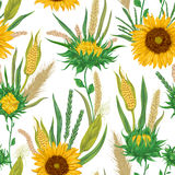 Seamless pattern with cereals and sunflowers. Barley, wheat, rye, corn and millet. Rustic floral background. Royalty Free Stock Photography