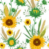 Seamless pattern with cereals and sunflowers. Barley, wheat, rye, corn and oat. Stock Photography