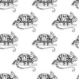 Seamless pattern with chameleon Royalty Free Stock Photography