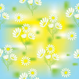 Seamless pattern with chamomile Royalty Free Stock Photography