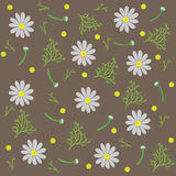 Seamless pattern of chamomile flowers and branches isolated, brown background. Vector Illustration. Stock Photography