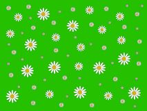 Seamless pattern with chamomile flowers on green background floral ornament royalty free illustration