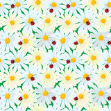 Seamless pattern with chamomile flowers and ladybirds, summer ba Royalty Free Stock Photos
