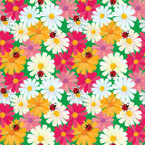 Seamless pattern with chamomile flowers and ladybirds, summer ba Stock Photography