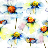 Seamless pattern with Chamomile flowers. Watercolor flowers Royalty Free Stock Image