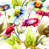 Seamless pattern with Chamomile flowers. Watercolor flowers Stock Photos