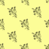 Seamless Pattern with Chamomile Royalty Free Stock Photos