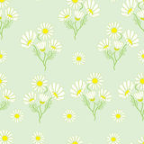 Seamless pattern with chamomile herbs. On green background Stock Photography