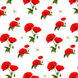 Seamless pattern with chamomile and poppies Stock Photos