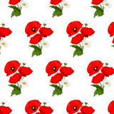 Seamless pattern with chamomile and poppies Stock Images