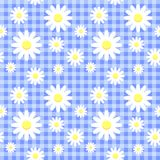 Seamless pattern with chamomiles Stock Image