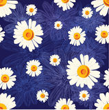 Seamless pattern with chamomiles on blue  background with lined flowers Stock Image