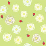 Seamless pattern with chamomiles and ladybirds on green field Stock Images