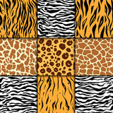 Seamless pattern with cheetah skin. vector background. Colorful zebra and tiger, leopard and giraffe exotic animal print Stock Images