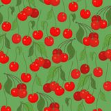 Seamless pattern with cherries Stock Images
