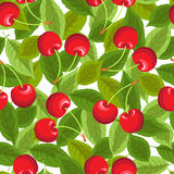 Seamless pattern with cherries Stock Image