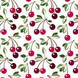 Seamless pattern with cherry. Royalty Free Stock Image