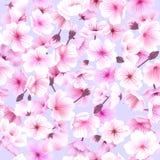 Seamless pattern with cherry blossom, Blossoming Oriental , Sakura Flowering Spring Festival Hanami Stock Images