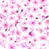 Seamless pattern with cherry blossom, Blossoming Oriental , Sakura Flowering Spring Festival Hanami Royalty Free Stock Image