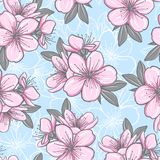 Seamless pattern with cherry blossom Royalty Free Stock Photography