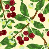 Seamless pattern of cherry branches on a beige background. royalty free illustration