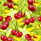 Seamless pattern cherry cannon Stock Image