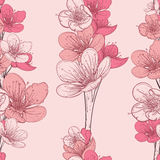 Seamless pattern with cherry tree blossom. Vintage hand drawn vector illustration Royalty Free Stock Image