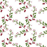 Seamless pattern with cherry tree branch, flowers, leaves and berries Stock Images