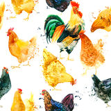 Seamless pattern with Chicken and Rooster. Stock Photo