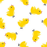 Seamless pattern with chickens Royalty Free Stock Photos