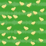 Seamless pattern with chickens on the grass Stock Image
