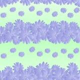 Seamless pattern of chicory flowers stock illustration