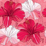 Seamless pattern with Chinese Hibiscus flower  Royalty Free Stock Photo