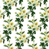 Seamless pattern with chrysanthemum. Hand drawn watercolor illustration royalty free illustration