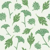 Seamless pattern with chrysanthemums Stock Images