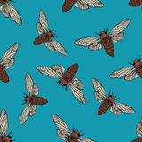 Seamless pattern with cicada . Cicadidae. Chremistica umbrosa.     hand-drawn cicada . Stock Images