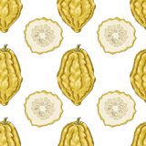 Seamless pattern with citron Stock Photography