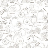 Seamless pattern with citrus fruit on white background Royalty Free Stock Photography