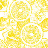 Seamless pattern with citrus fruits. Royalty Free Stock Photos