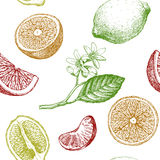 Seamless pattern with citrus fruits. Stock Photos