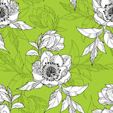 Seamless pattern with Clematis flower in white on the green background Royalty Free Stock Photos