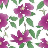 Seamless pattern with Clematis flowers. Stock Illustration