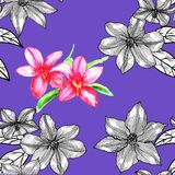 Seamless pattern with clematis. Hand drawn. Graphics royalty free illustration