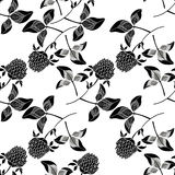 Seamless pattern with clover.  Black and white  hand-drawn vecto. Monochrome  background with silhouettes of clovers Royalty Free Stock Photo