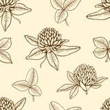 Seamless pattern with clover Stock Image