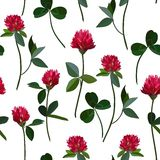 Seamless pattern clover Royalty Free Stock Images
