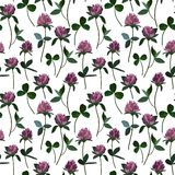 Seamless pattern clover Stock Image